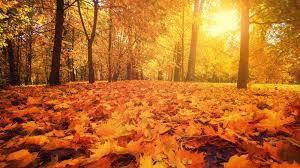 Photo of در رنگستان پاییز